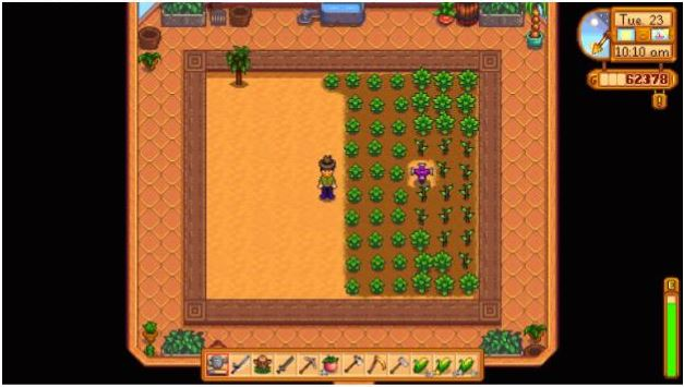 The player character stands next to a collection of green vegetables in a virtual greenhouse in Stardew Valley.